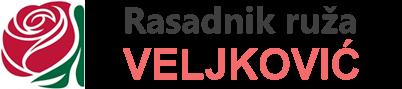 Sadnice ruža – Rasadnik ruža Veljković